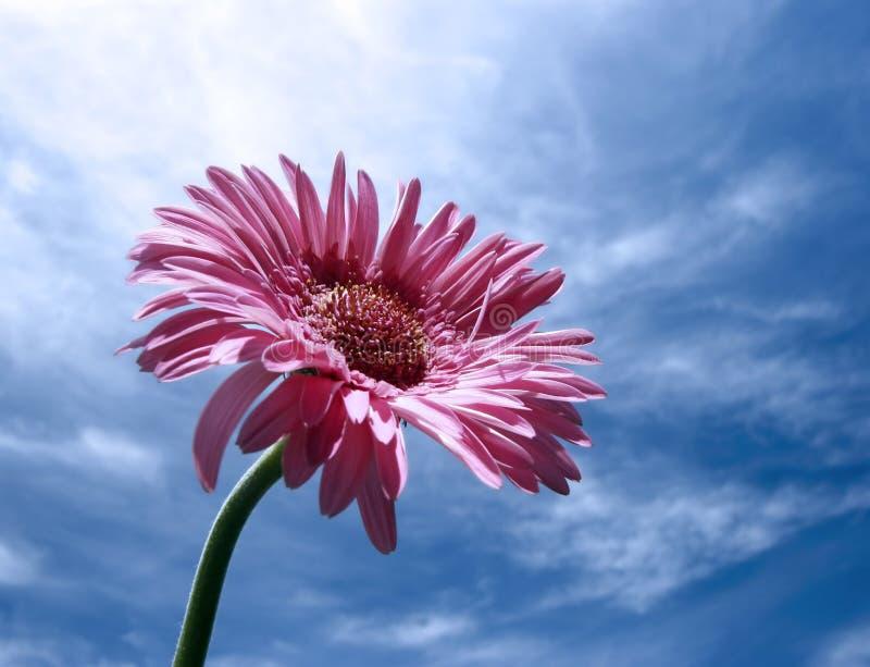 enkel blomma royaltyfria foton