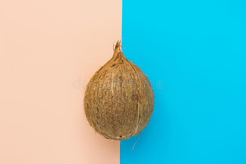Enkel brun kokosnöt på bakgrund för peachy rosa mintkaramell för duotone blå Idérik mataffisch Begrepp för tropisk semester för s fotografering för bildbyråer