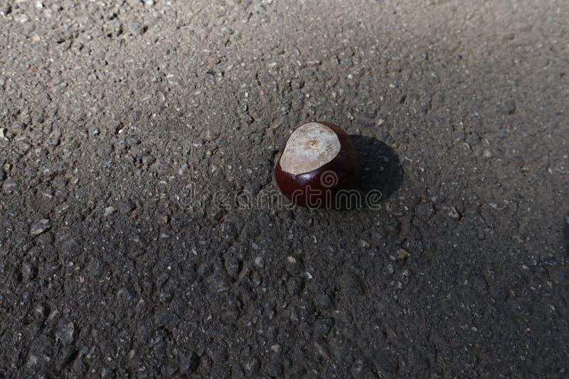 Enkel conker på trottoaren i september royaltyfria foton