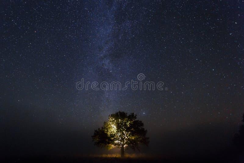 Enkel ek under stjärnklar himmel på natten royaltyfri fotografi