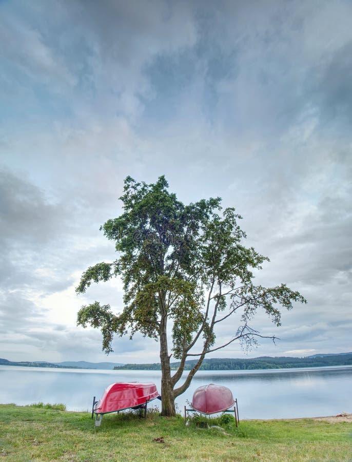 Enkel eka som staplas på den uppochnervända sjön tom strand arkivbilder