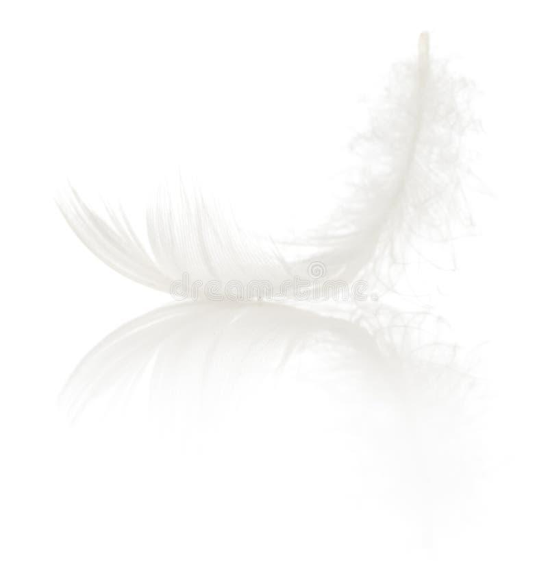 enkel fjäder royaltyfri bild