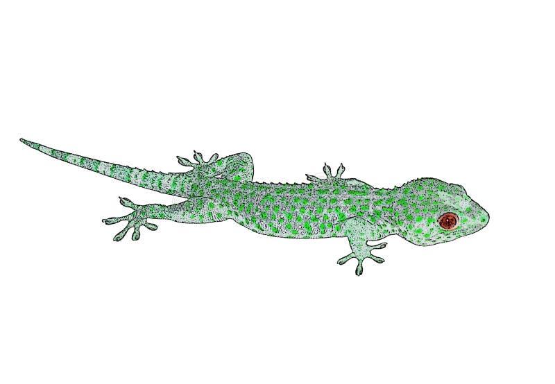 Enkel grön ödla arkivbild