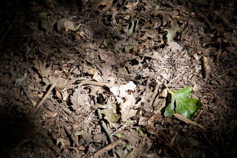 enkel grön leaf royaltyfri bild