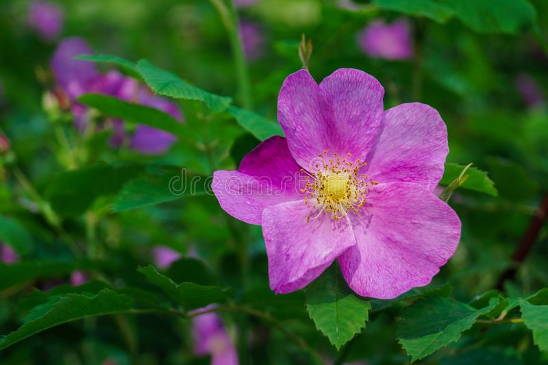 Enkel härlig blomma royaltyfria foton