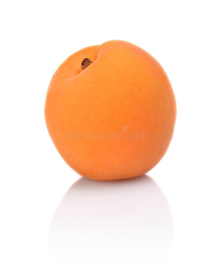 Enkel hel aprikos på vit fotografering för bildbyråer