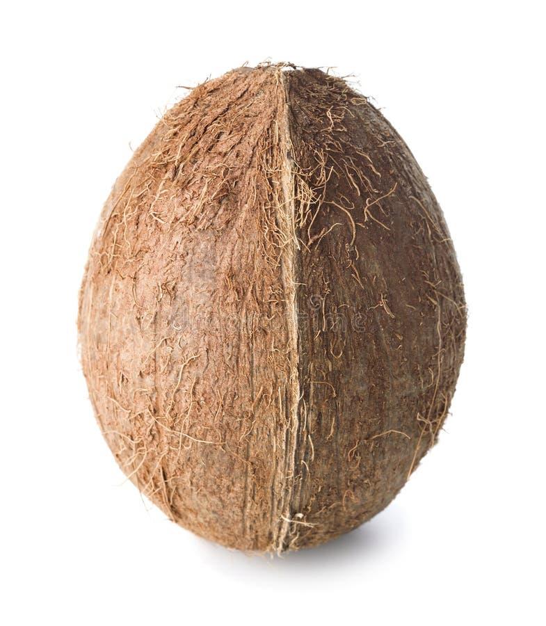 Enkel hel kokosnöt arkivfoto