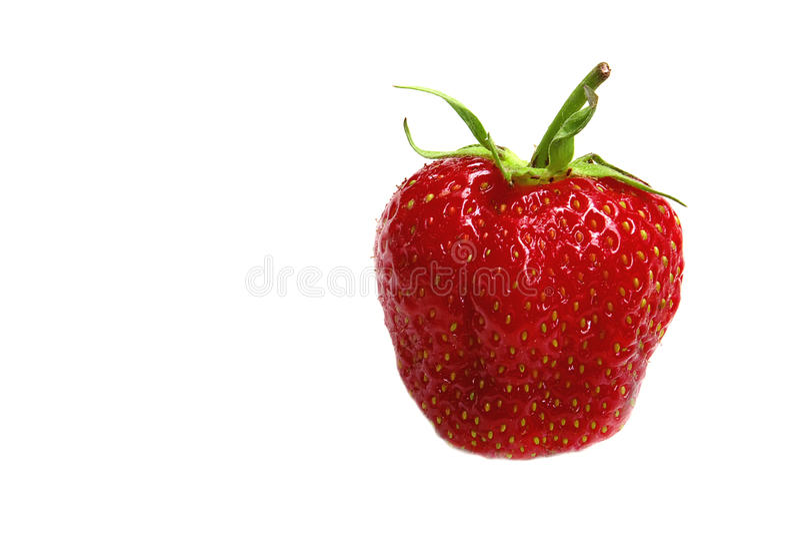 enkel jordgubbe arkivbild