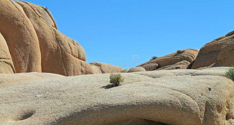 Enkel kaktus som växer i en stenblock i öknen arkivbilder
