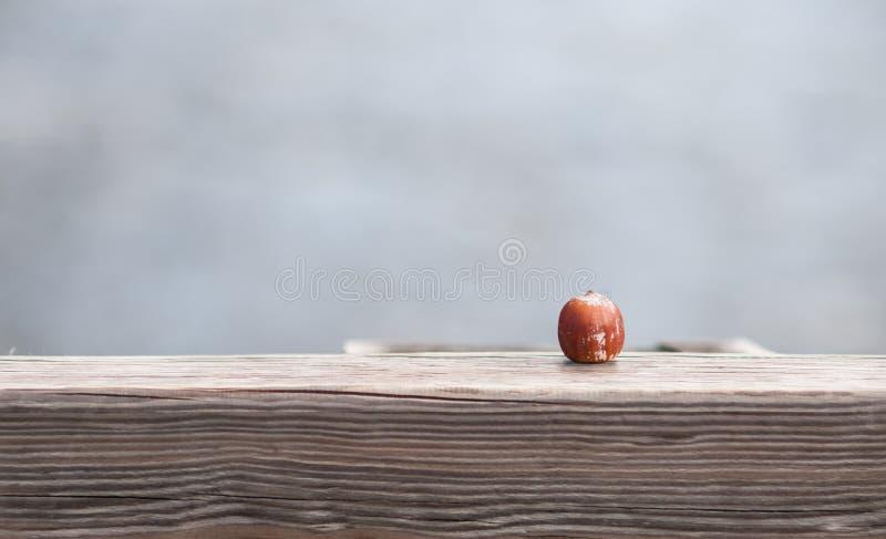 Enkel kastanj på den Wood plankan royaltyfri bild