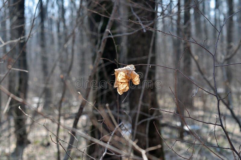enkel leaf arkivbilder