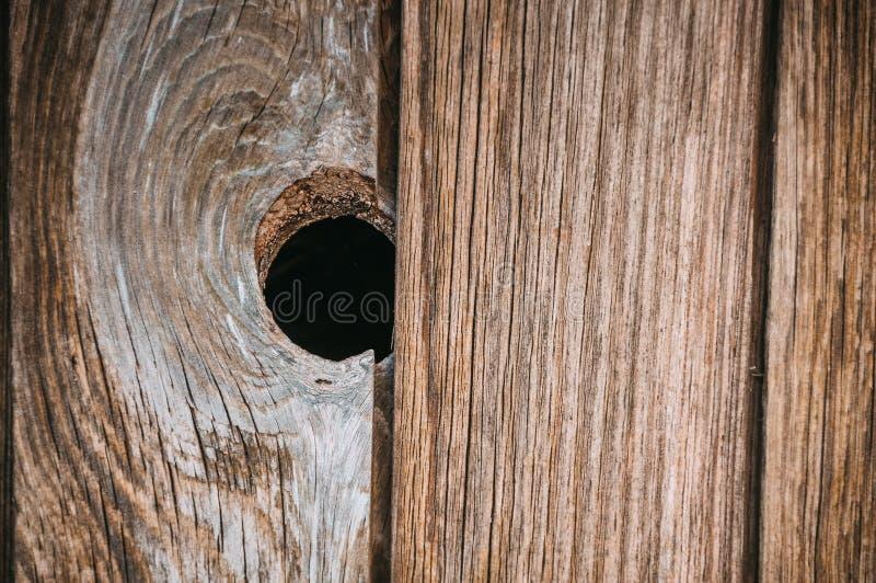 Enkel mörk wood fnuren in i den trätexturerade plankan av gammal åldrig timmer royaltyfri bild