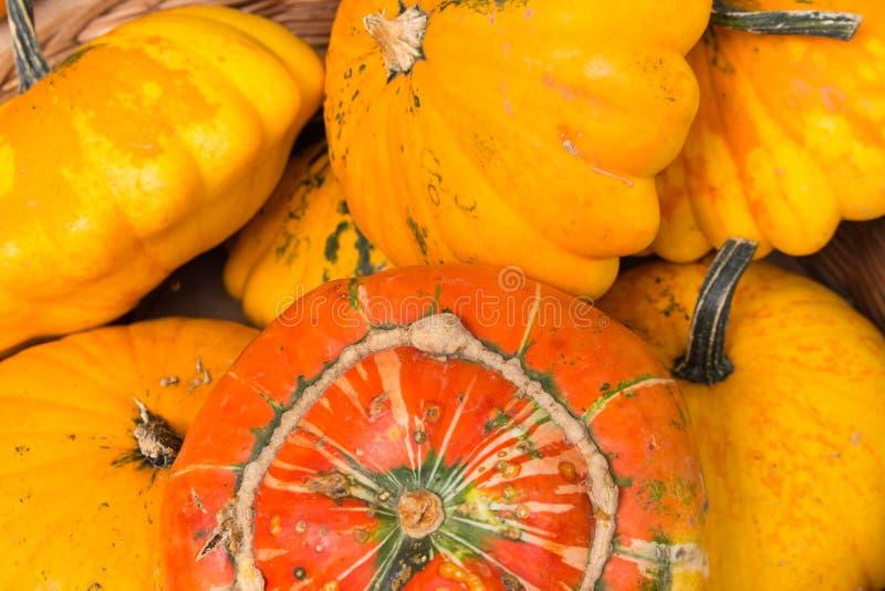 Enkel orange pumpabaksida arkivfoton