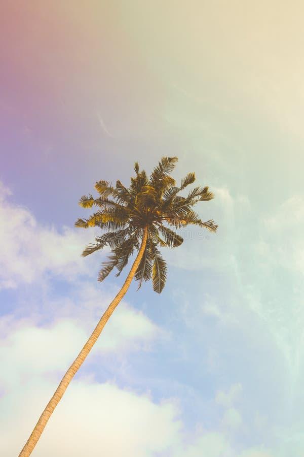 Enkel palmträd under solig dag med tappningfiltret arkivbild