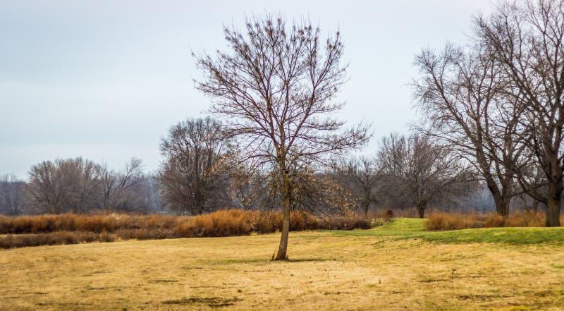enkel plattform tree för ensam fält arkivfoton