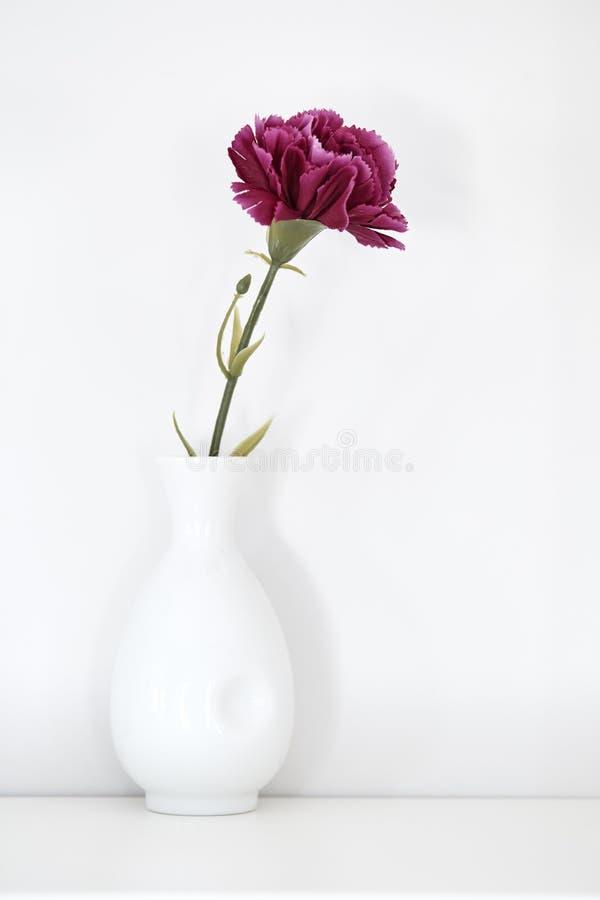 enkel purpurfärgad nejlika i vas royaltyfria foton
