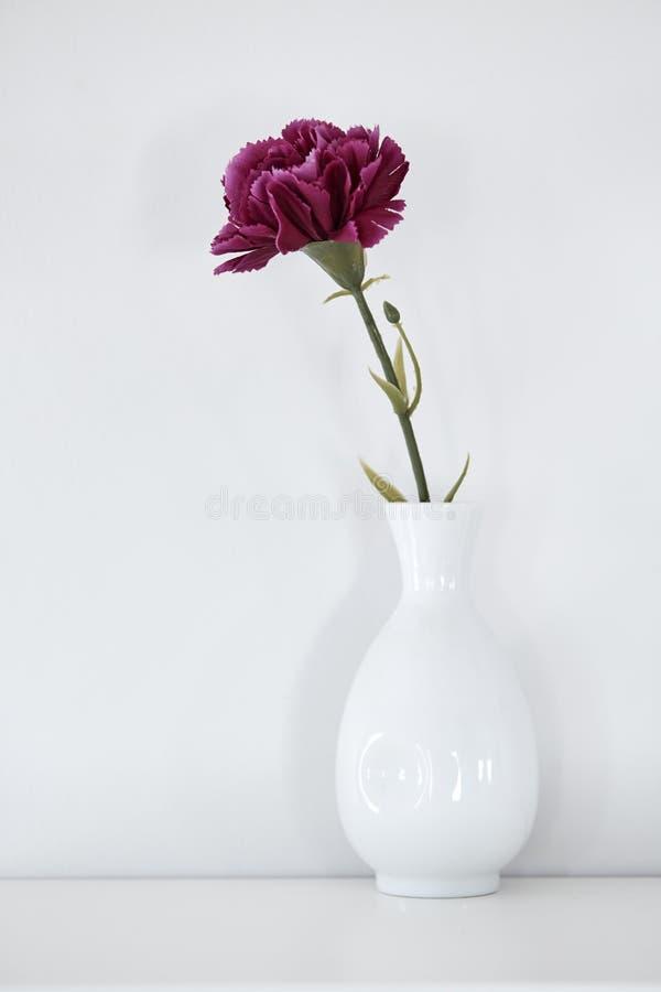 enkel purpurfärgad nejlika i vas royaltyfri foto