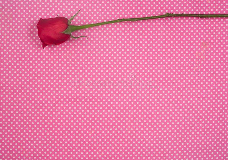 Enkel röd ros mot den rosa och vita bakgrunden royaltyfria foton