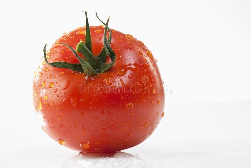 Enkel tomat med vattensmå droppar, närbild royaltyfria foton