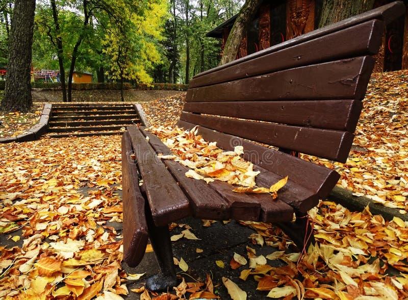 Enkel träbänk i Autumn Park With Colorful fotografering för bildbyråer