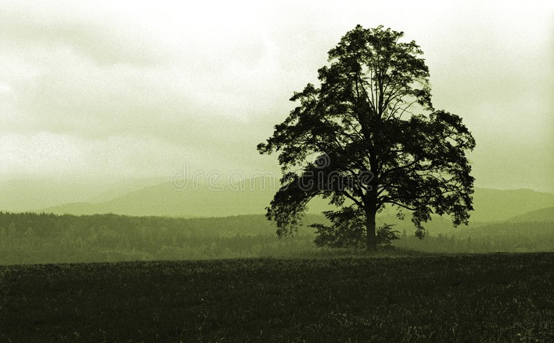 enkel tree royaltyfria foton