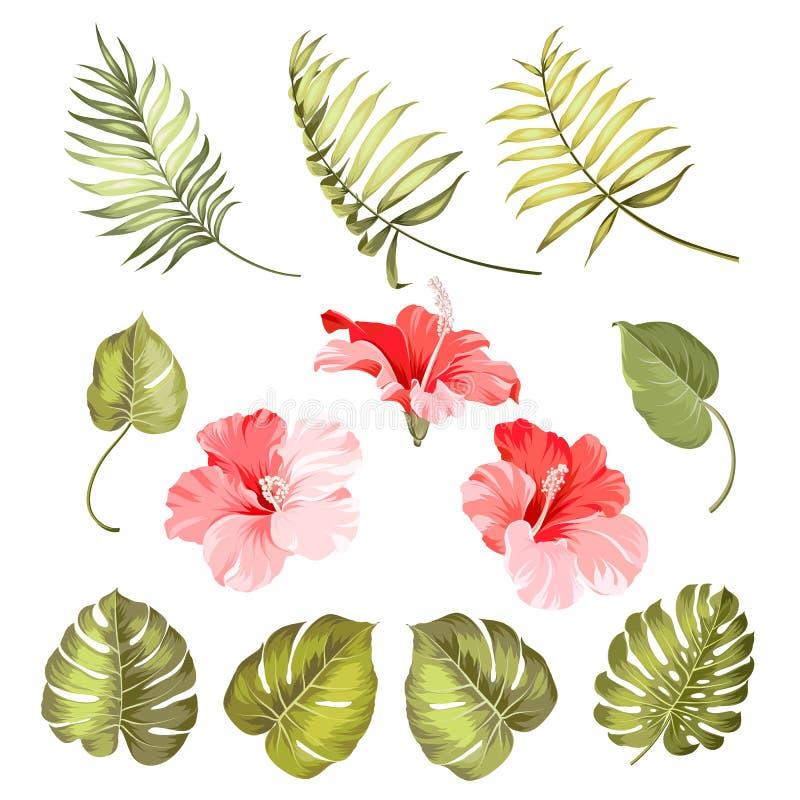 Enkel tropisk blomma för hibiskus stock illustrationer