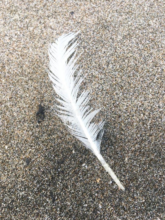 Enkel vit fjäder på stranden royaltyfri bild