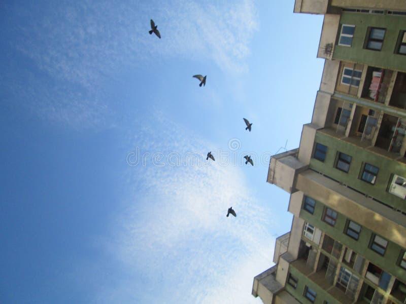 Enkel vliegend stock fotografie