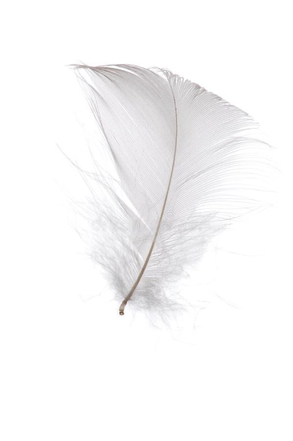 enkel white för fjäder arkivbild
