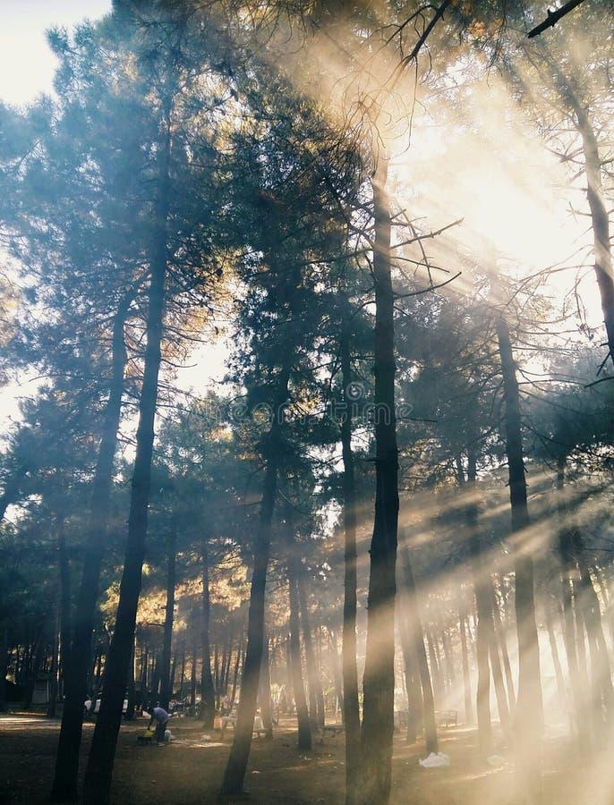 Enkelsidiga solstrålar till och med trän royaltyfri foto