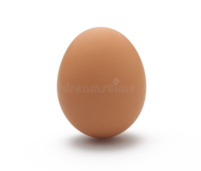 Enkelt ägg på vit bakgrund royaltyfria foton