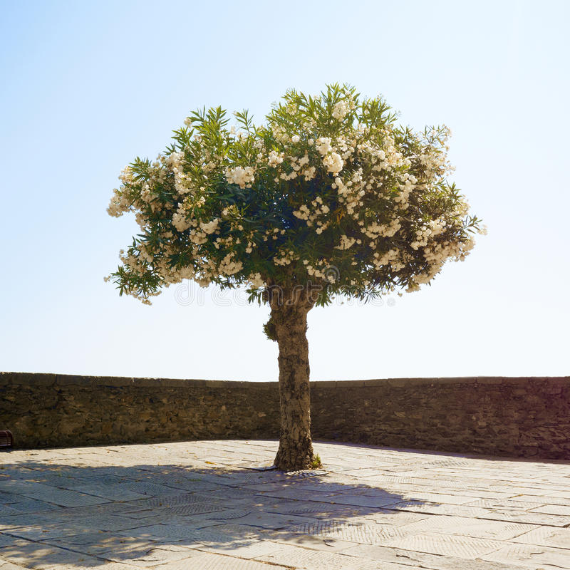 Enkelt blomstra träd royaltyfri foto