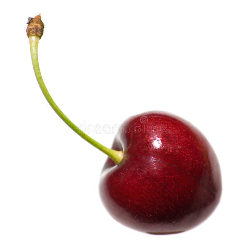 enkelt Cherry royaltyfri bild