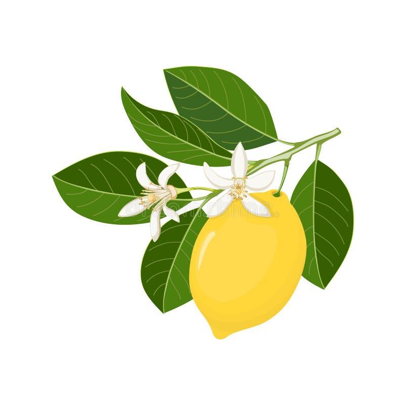 Enkelt fatta med den gula citronen och blomningen royaltyfri illustrationer