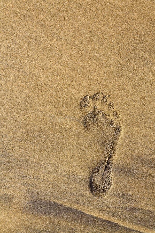 Enkelt mänskligt barfota fotspår av den högra foten i brun gul sandstrandbakgrund, sommarsemester eller klimatförändringbegrepp arkivfoto