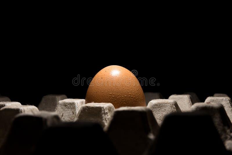 Enkelt nytt fegt ägg i magasin med svart bakgrund royaltyfri bild