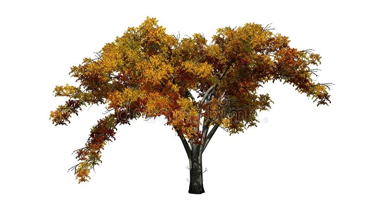 Enkelt träd för amerikansk alm i höst stock illustrationer