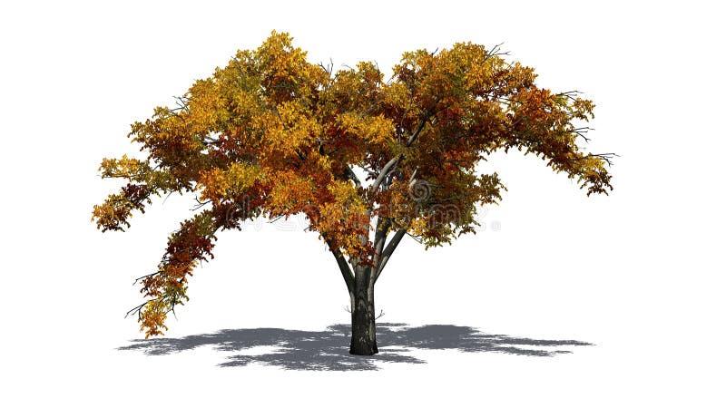 Enkelt träd för amerikansk alm i höst med skugga på golvet vektor illustrationer