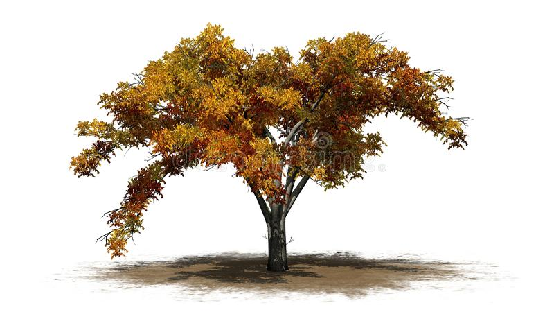 Enkelt träd för amerikansk alm i höst på ett sandområde vektor illustrationer