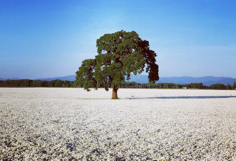 Enkelt träd i mitt av ett fält om blommor arkivfoton