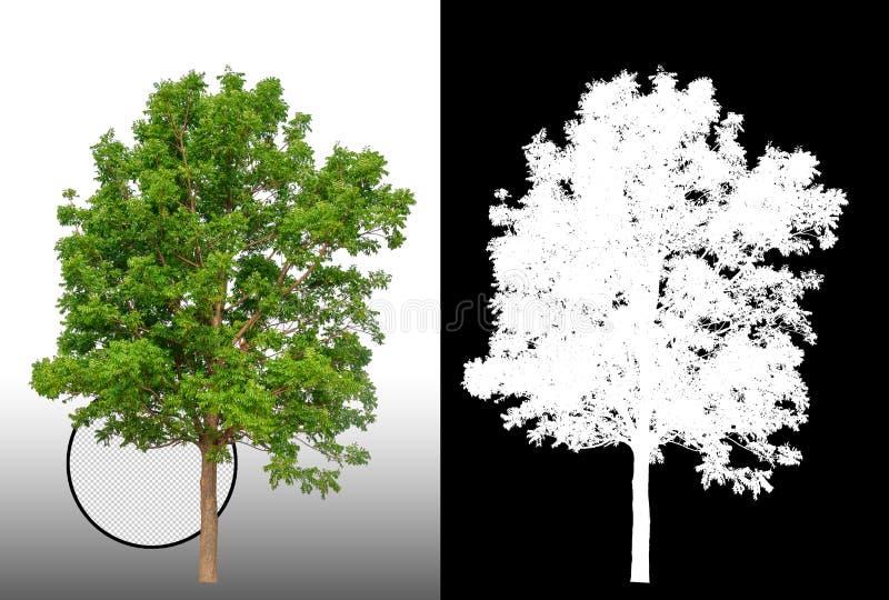 Enkelt träd med urklippbanan royaltyfri illustrationer
