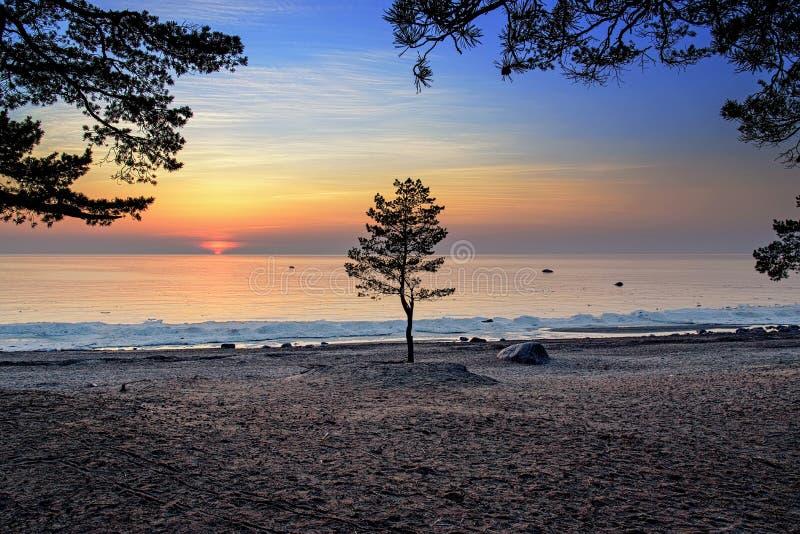 Enkelt tr?d mot solnedg?ngen p? golfen av Finland royaltyfria bilder