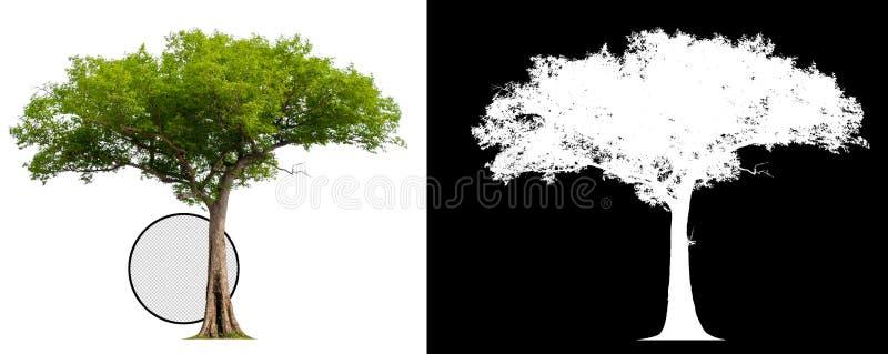 Enkelt tr?d med urklippbanan vektor illustrationer