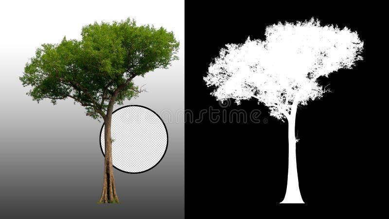 Enkelt tr?d med urklippbanan stock illustrationer