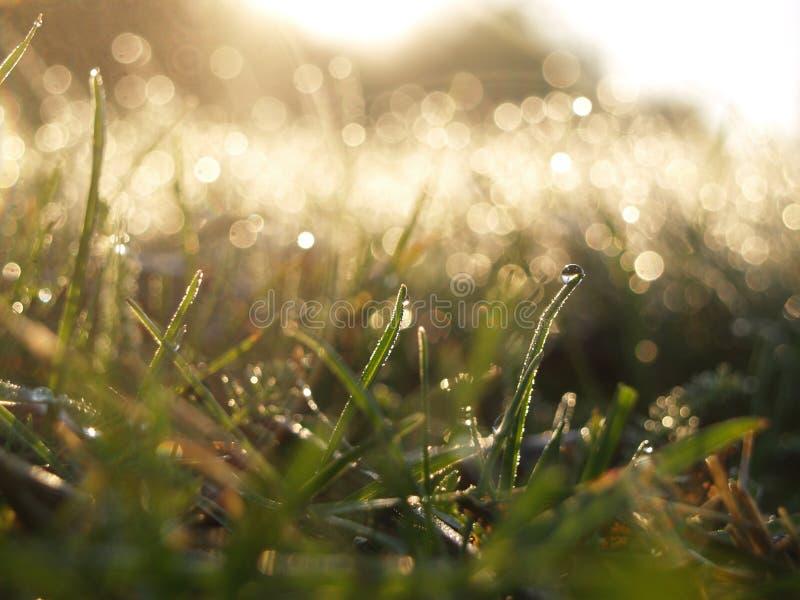 Enkla regndroppar på ett grässtrå arkivbilder