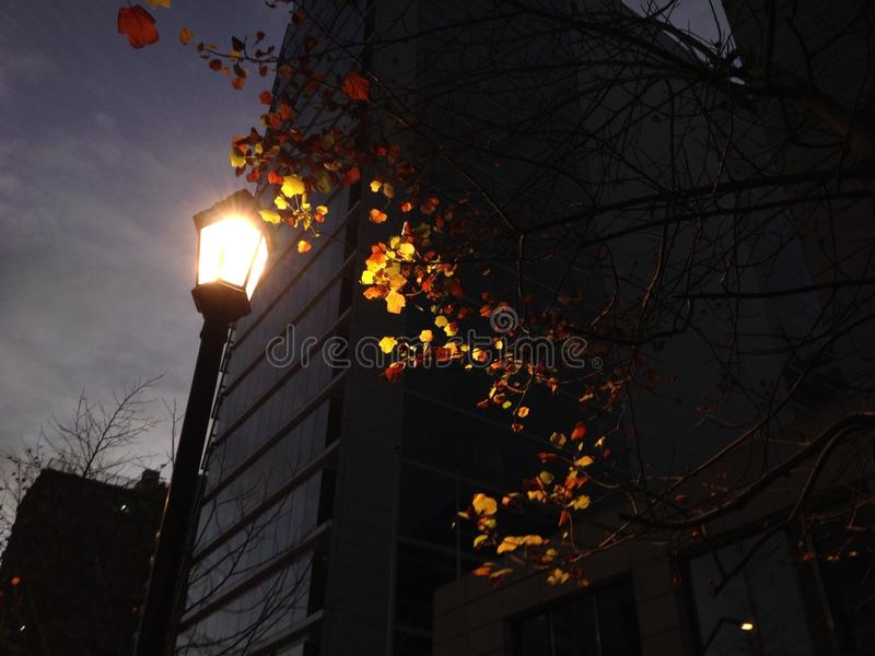 Enlightment the city with a lantern visit. Lantern enlighting some leaves in the city streets, with buldings behind royalty free stock photos