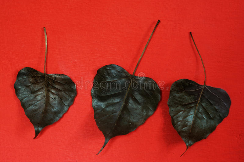 Ennegrezca las hojas en una pared roja fotografía de archivo