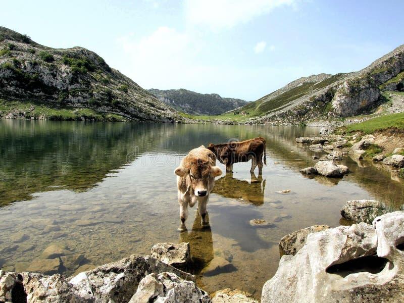 Download Enol lake stock image. Image of peak, landscape, mountain - 11604065