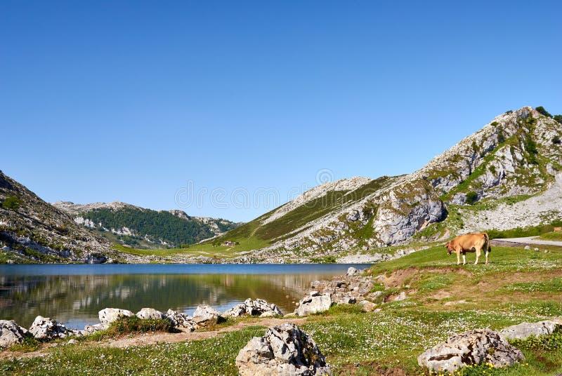 Enol lake. Covagonga, Asturias, Spain royalty free stock photos