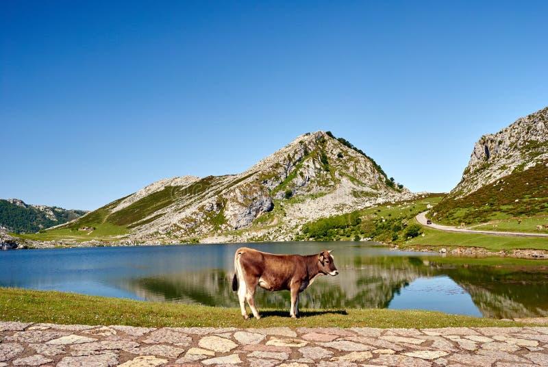 Enol lake. Covagonga, Asturias, Spain stock image